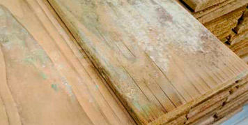 Holz beim Trocknen anfällig für Schimmelpilzbefall